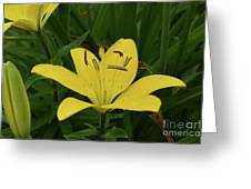 Gorgeous Yellow Lily Growing In Nature Up Close Greeting Card