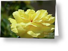 Gorgeous Yellow Rose Greeting Card
