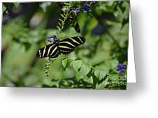 Gorgeous Zebra Butterfly On Some Blue Flowers Greeting Card