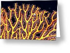Gorgonian Coral Fan Greeting Card