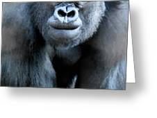 Gorilla In The Mist Wall Art Greeting Card by David Millenheft