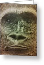Gorilla In The Zoo Greeting Card