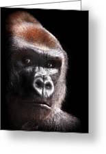 Gorilla ... Kouillou Greeting Card