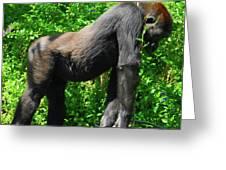 Gorilla Posing Greeting Card