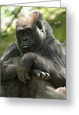 Gorilla1 Greeting Card