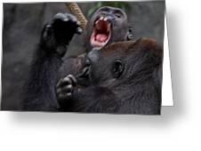 Gorillas Fighting Greeting Card