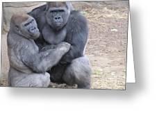 Gorillas Greeting Card