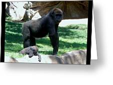 Gorillas Mary Joe Baby And Emonty Mother 6 Greeting Card