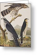 Goshawk And Stanley Hawk Greeting Card
