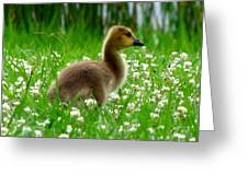 Gosling 1 Greeting Card