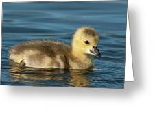 Gosling.. Greeting Card