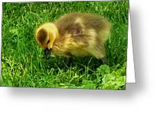 Gosling On Her Own Greeting Card