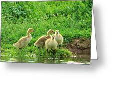 Gosling Shore Side Greeting Card
