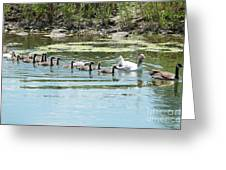 Goslings In A Row Greeting Card