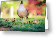 Goslings In The Park Greeting Card