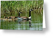 Goslings In Tow Greeting Card
