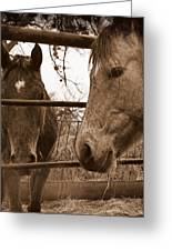 Gossip At The Fence Greeting Card