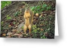 Got A Peanut? Greeting Card