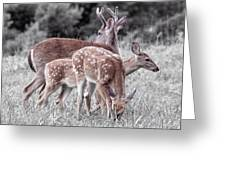 Humor Got Some Doe And Two Bucks Greeting Card