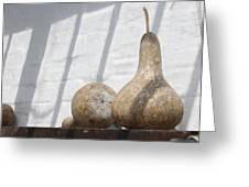 Gourds In Shadow Greeting Card
