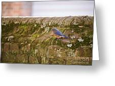 Governor's Palace Bluebird Greeting Card