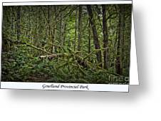 Gowlland Park Treescape Greeting Card