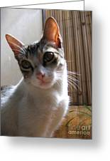 Gowrie The Cat Greeting Card