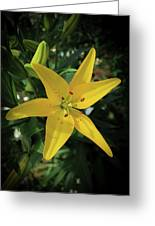 Grace Flowers Daylily Art Greeting Card