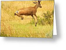 Graceful Elevation ... Montana Art Photo Greeting Card