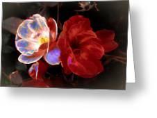 Graceful Glow Greeting Card