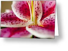 Graceful Lily Series 19 Greeting Card