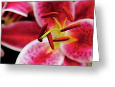 Graceful Lily Series 21 Greeting Card