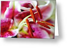 Graceful Lily Series 23 Greeting Card