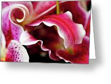 Graceful Lily Series 26 Greeting Card