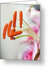 Graceful Lily Series 28 Greeting Card