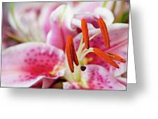 Graceful Lily Series 29 Greeting Card