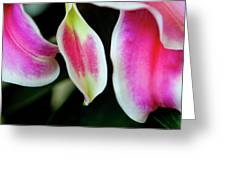 Graceful Lily Series 30 Greeting Card