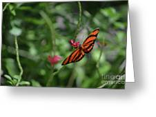 Graceful Oak Tiger Butterfly Around Pink Flowers Greeting Card