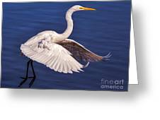 Graceful Greeting Card