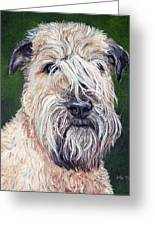 Gracie, Soft Coated Wheaten Terrier Greeting Card