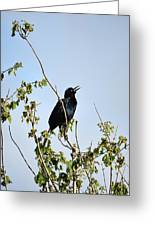 Grackle Cackle Greeting Card