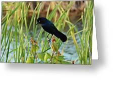 Grackle Hiding In Marsh Greeting Card