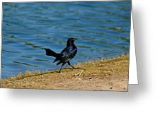 Grackle On The Move Greeting Card
