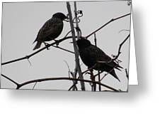 Grackles On Branches  Greeting Card