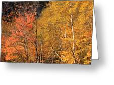 Grafton Notch Foliage Greeting Card