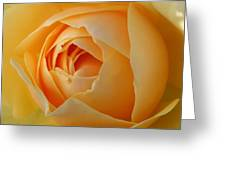Graham Thomas Old Fashioned Rose Greeting Card by Jocelyn Friis