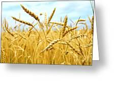 Grain Field Greeting Card by Elena Elisseeva
