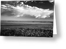 Grain Field Greeting Card
