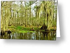Grand Bayou Swamp Greeting Card