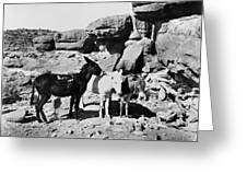 Grand Canyon: Donkeys Greeting Card